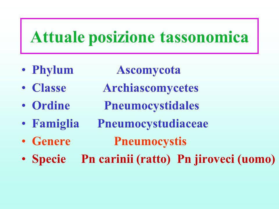 Attuale posizione tassonomica Phylum Ascomycota Classe Archiascomycetes Ordine Pneumocystidales Famiglia Pneumocystudiaceae Genere Pneumocystis Specie