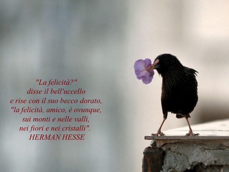 La felicità? disse il bell uccello e rise con il suo becco dorato, la felicità, amico, è ovunque, sui monti e nelle valli, nei fiori e nei cristalli .