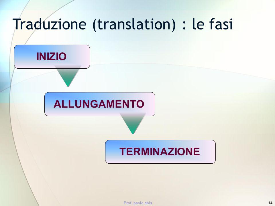 Prof. paolo abis14 INIZIO Traduzione (translation) : le fasi ALLUNGAMENTOTERMINAZIONE