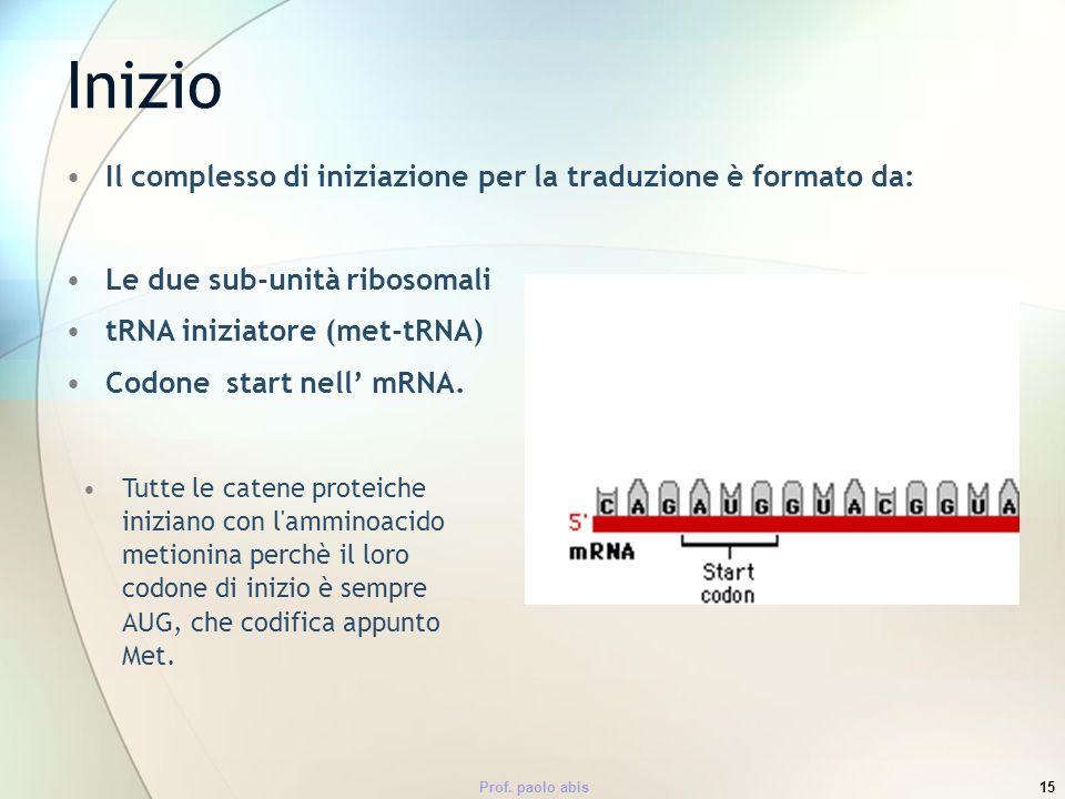 Prof. paolo abis15 Il complesso di iniziazione per la traduzione è formato da: Le due sub-unità ribosomali tRNA iniziatore (met-tRNA) Codone start nel