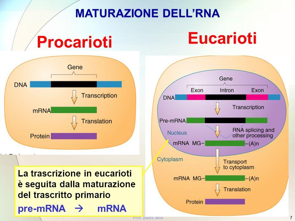 Prof. paolo abis7 Procarioti Eucarioti MATURAZIONE DELLRNA La trascrizione in eucarioti è seguita dalla maturazione del trascritto primario pre-mRNA m