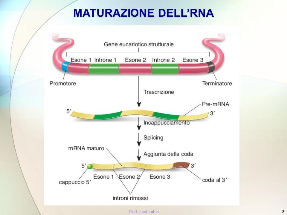 Prof. paolo abis8 MATURAZIONE DELLRNA