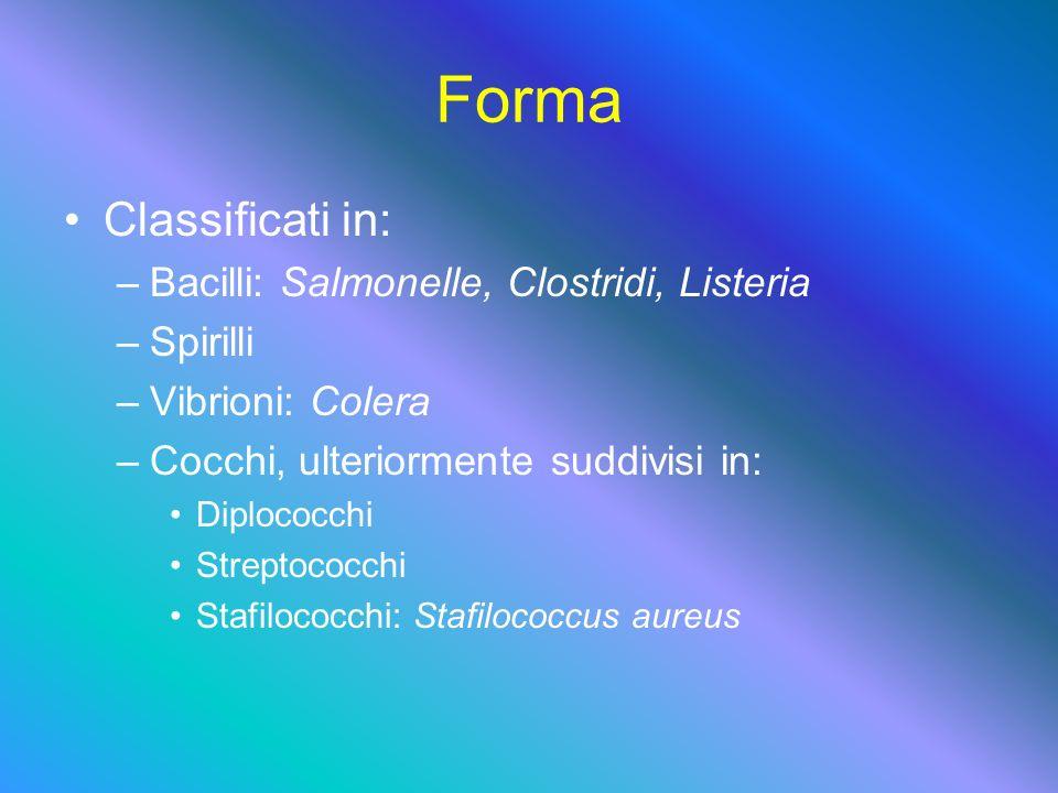 Forma Classificati in: –B–Bacilli: Salmonelle, Clostridi, Listeria –S–Spirilli –V–Vibrioni: Colera –C–Cocchi, ulteriormente suddivisi in: Diplococchi Streptococchi Stafilococchi: Stafilococcus aureus