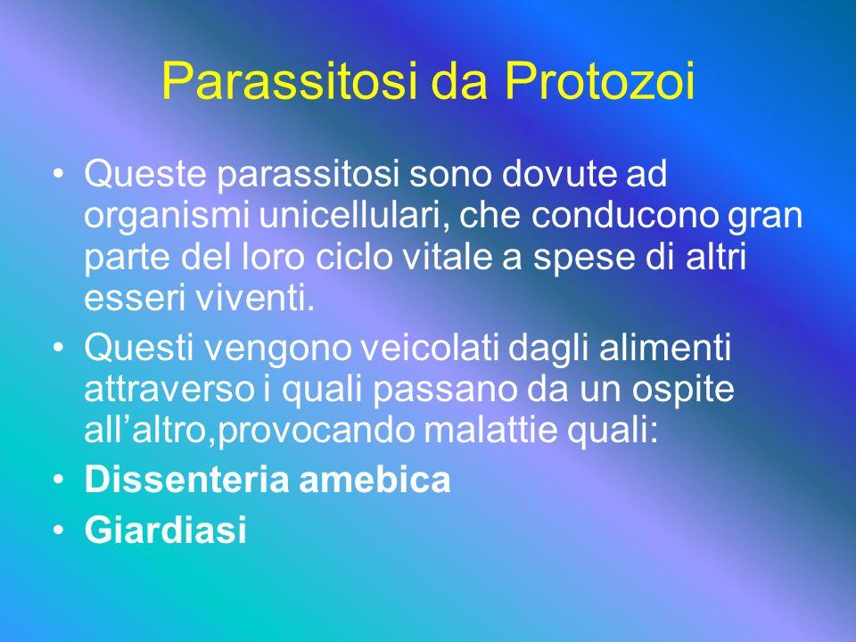 Parassitosi da Protozoi Queste parassitosi sono dovute ad organismi unicellulari, che conducono gran parte del loro ciclo vitale a spese di altri esseri viventi.