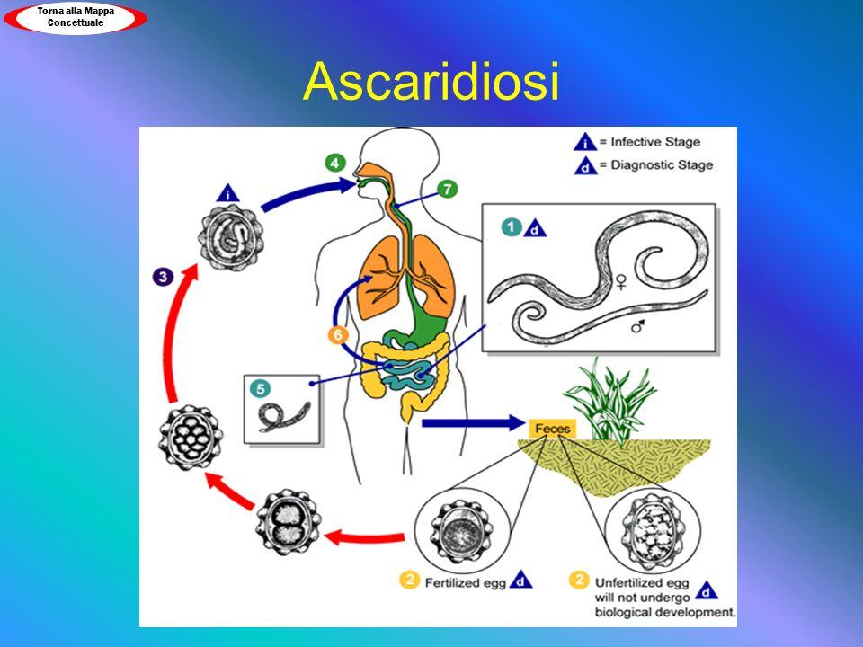 Ascaridiosi Torna alla Mappa Concettuale