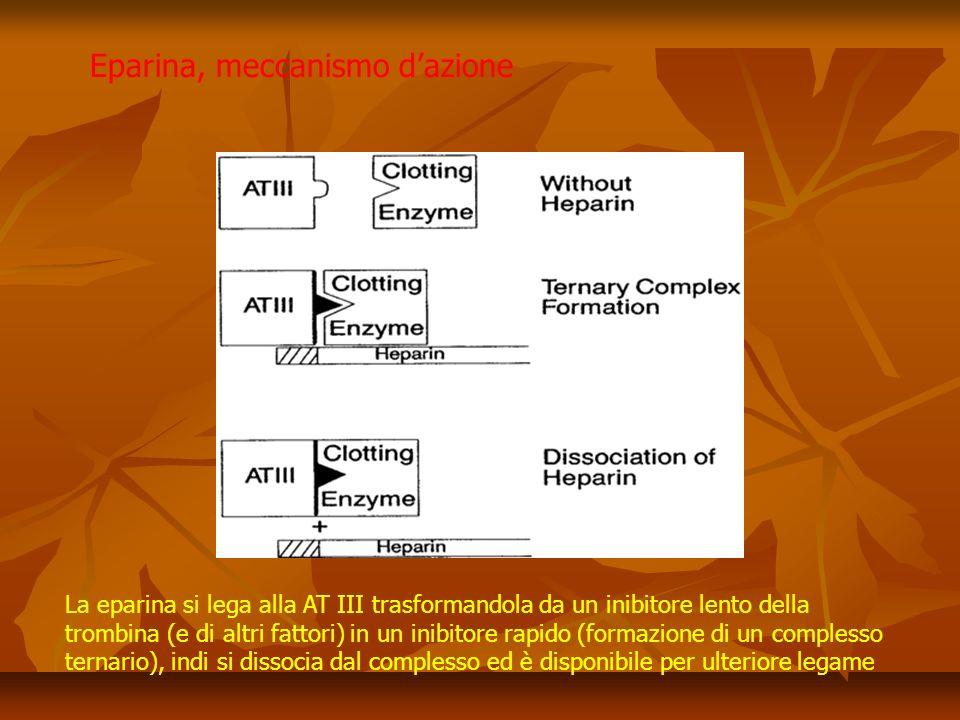 La eparina si lega alla AT III trasformandola da un inibitore lento della trombina (e di altri fattori) in un inibitore rapido (formazione di un complesso ternario), indi si dissocia dal complesso ed è disponibile per ulteriore legame Eparina, meccanismo dazione