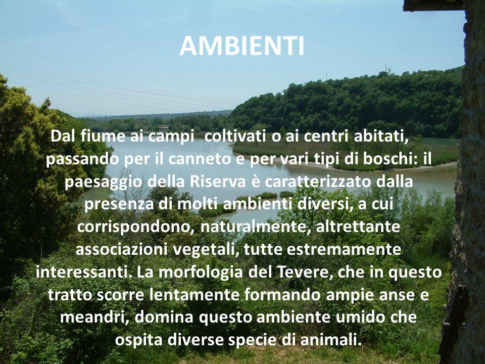 FLORA Bosco di palude, bosco ripariale, foresta mista, foresta mediterranea.