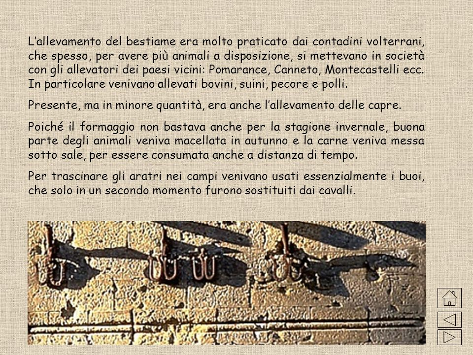 Economia medioevale volterrana Leconomia di una tipica famiglia medioevale, abitante a Volterra o nelle zone limitrofe, era basata sullagricoltura e s