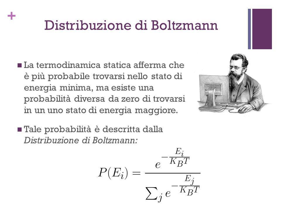 + Distribuzione di Boltzmann La termodinamica statica afferma che è più probabile trovarsi nello stato di energia minima, ma esiste una probabilità di