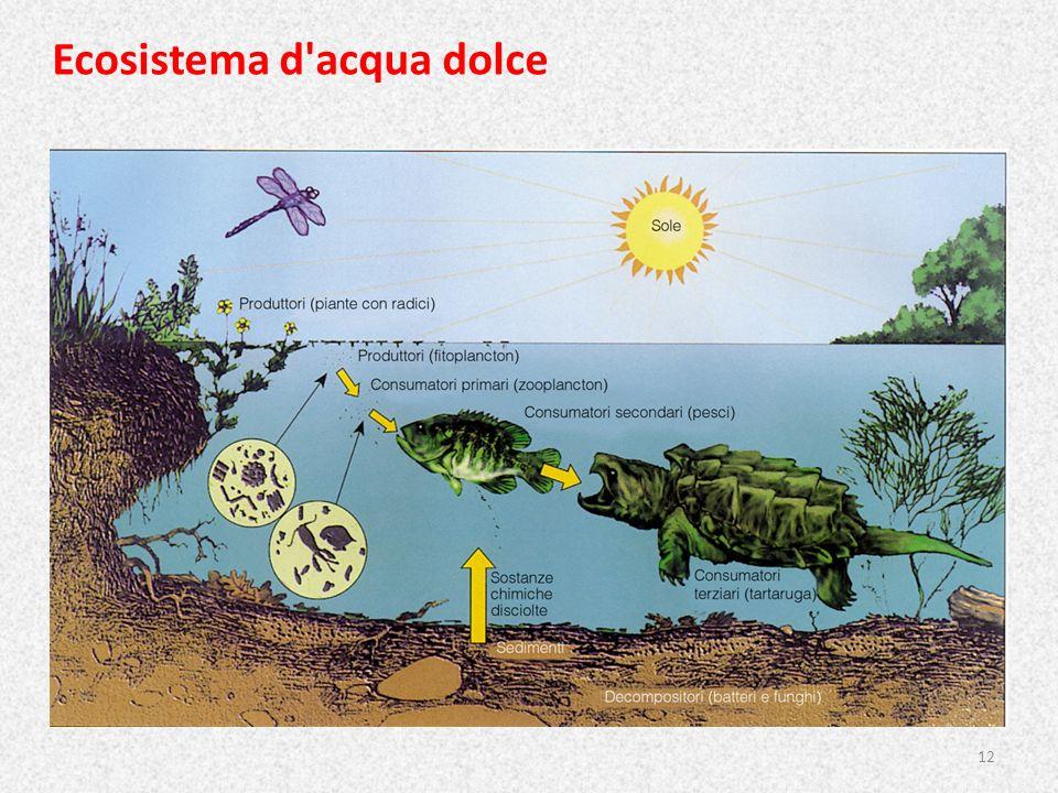 Ecosistema d'acqua dolce 12