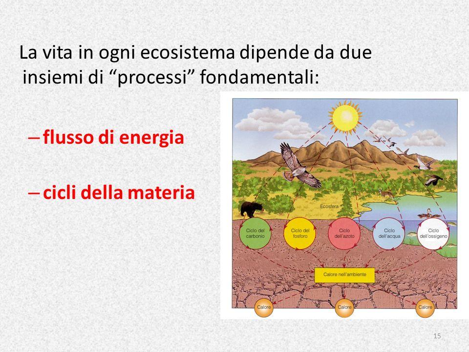 La vita in ogni ecosistema dipende da due insiemi di processi fondamentali: – flusso di energia – cicli della materia 15