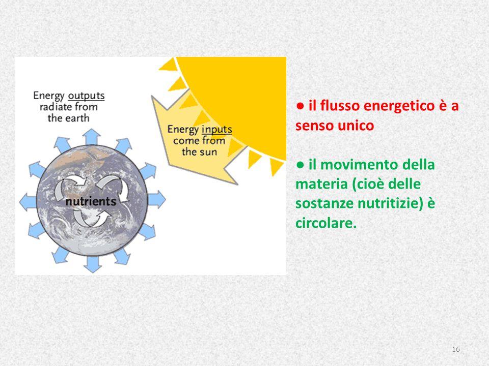 il flusso energetico è a senso unico il movimento della materia (cioè delle sostanze nutritizie) è circolare. 16