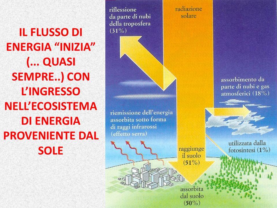 IL FLUSSO DI ENERGIA INIZIA (... QUASI SEMPRE..) CON LINGRESSO NELLECOSISTEMA DI ENERGIA PROVENIENTE DAL SOLE 17