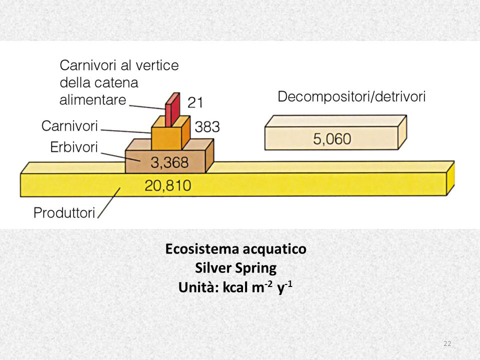 22 Ecosistema acquatico Silver Spring Unità: kcal m -2 y -1