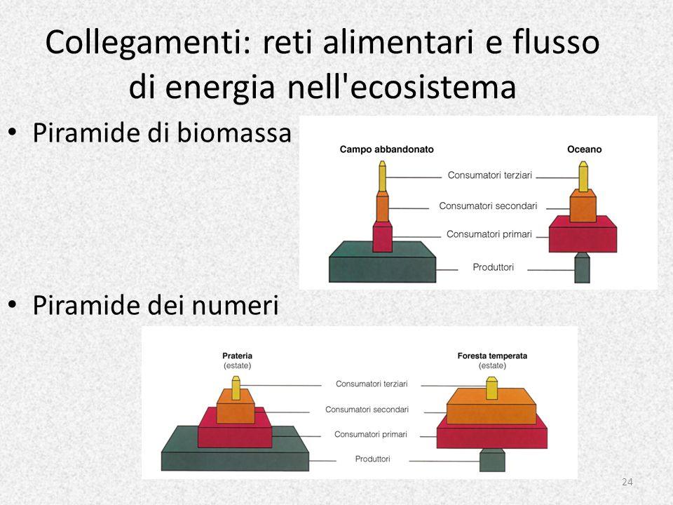 Collegamenti: reti alimentari e flusso di energia nell'ecosistema Piramide di biomassa Piramide dei numeri 24