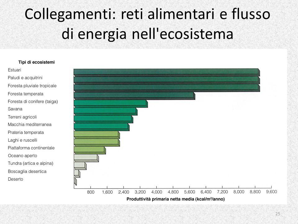 Collegamenti: reti alimentari e flusso di energia nell'ecosistema 25