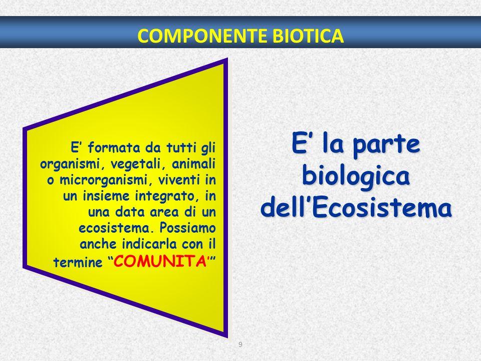 9 COMPONENTE BIOTICA E la parte biologica dellEcosistema E formata da tutti gli organismi, vegetali, animali o microrganismi, viventi in un insieme in