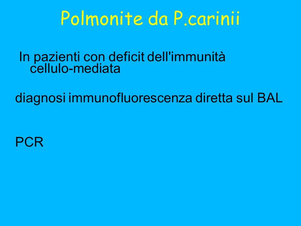 Polmonite da P.carinii In pazienti con deficit dell immunità cellulo-mediata diagnosi immunofluorescenza diretta sul BAL PCR