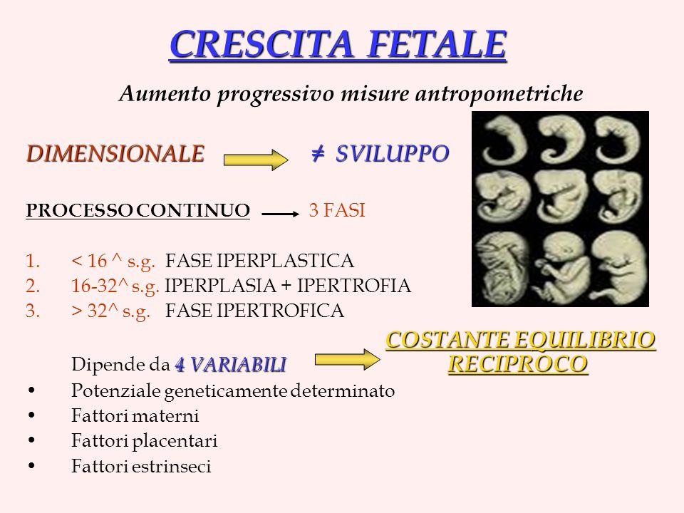 CRESCITA FETALE Aumento progressivo misure antropometriche DIMENSIONALE SVILUPPO PROCESSO CONTINUO 3 FASI 1.< 16 ^ s.g. FASE IPERPLASTICA 2.16-32^ s.g