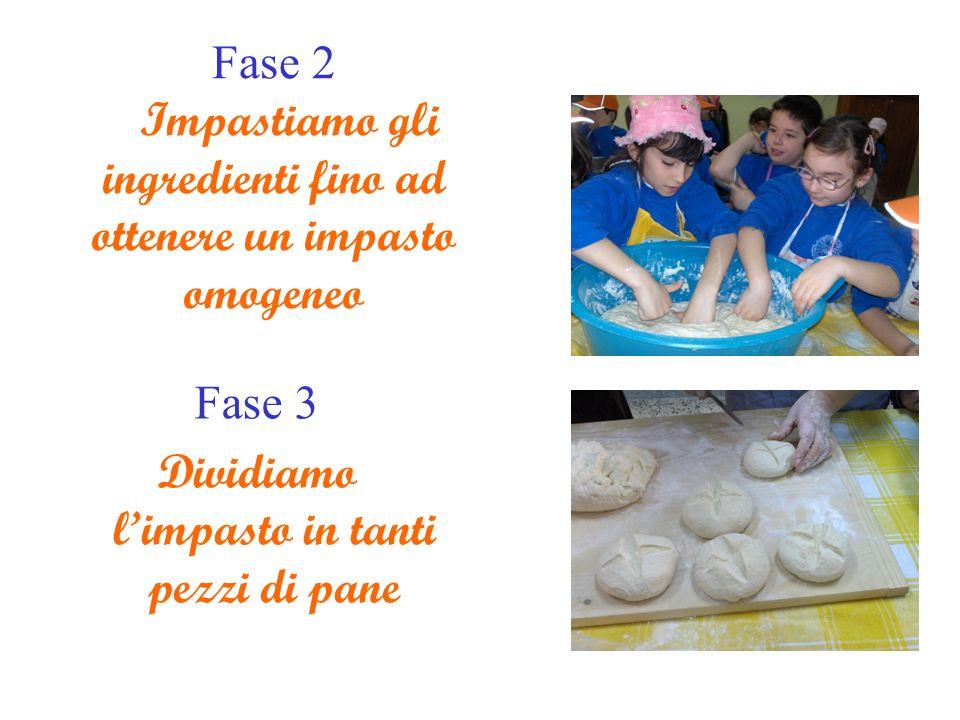 Fase 2 Impastiamo gli ingredienti fino ad ottenere un impasto omogeneo Fase 3 Dividiamo limpasto in tanti pezzi di pane