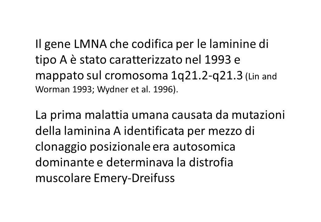 Il gene LMNA che codifica per le laminine di tipo A è stato caratterizzato nel 1993 e mappato sul cromosoma 1q21.2-q21.3 (Lin and Worman 1993; Wydner et al.
