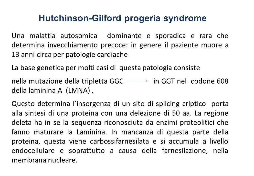 Una malattia autosomica dominante e sporadica e rara che determina invecchiamento precoce: in genere il paziente muore a 13 anni circa per patologie cardiache La base genetica per molti casi di questa patologia consiste nella mutazione della tripletta GGC in GGT nel codone 608 della laminina A (LMNA).