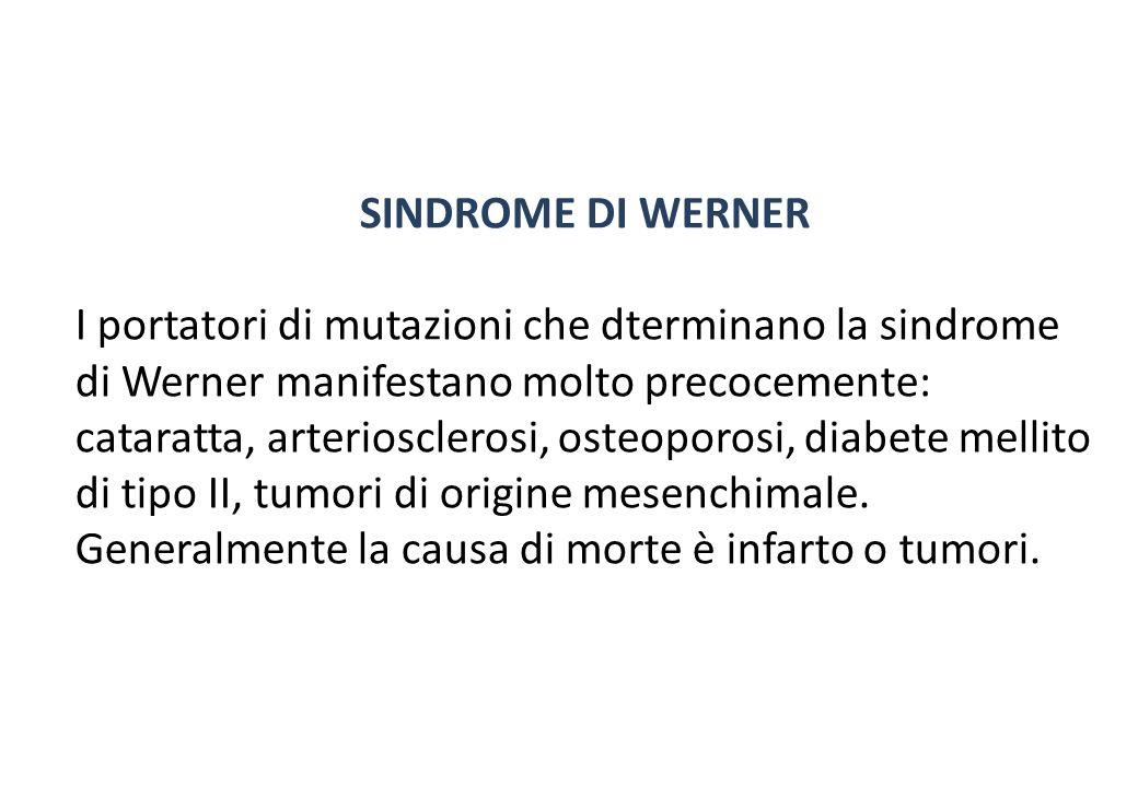 SINDROME DI WERNER I portatori di mutazioni che dterminano la sindrome di Werner manifestano molto precocemente: cataratta, arteriosclerosi, osteoporosi, diabete mellito di tipo II, tumori di origine mesenchimale.