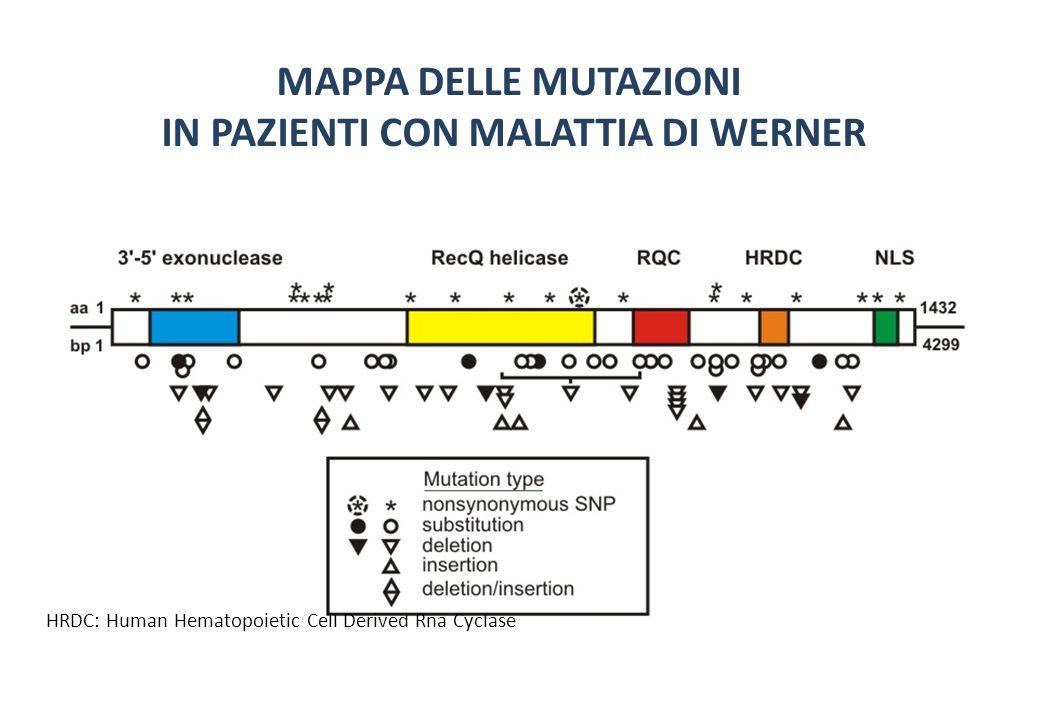MAPPA DELLE MUTAZIONI IN PAZIENTI CON MALATTIA DI WERNER HRDC: Human Hematopoietic Cell Derived Rna Cyclase