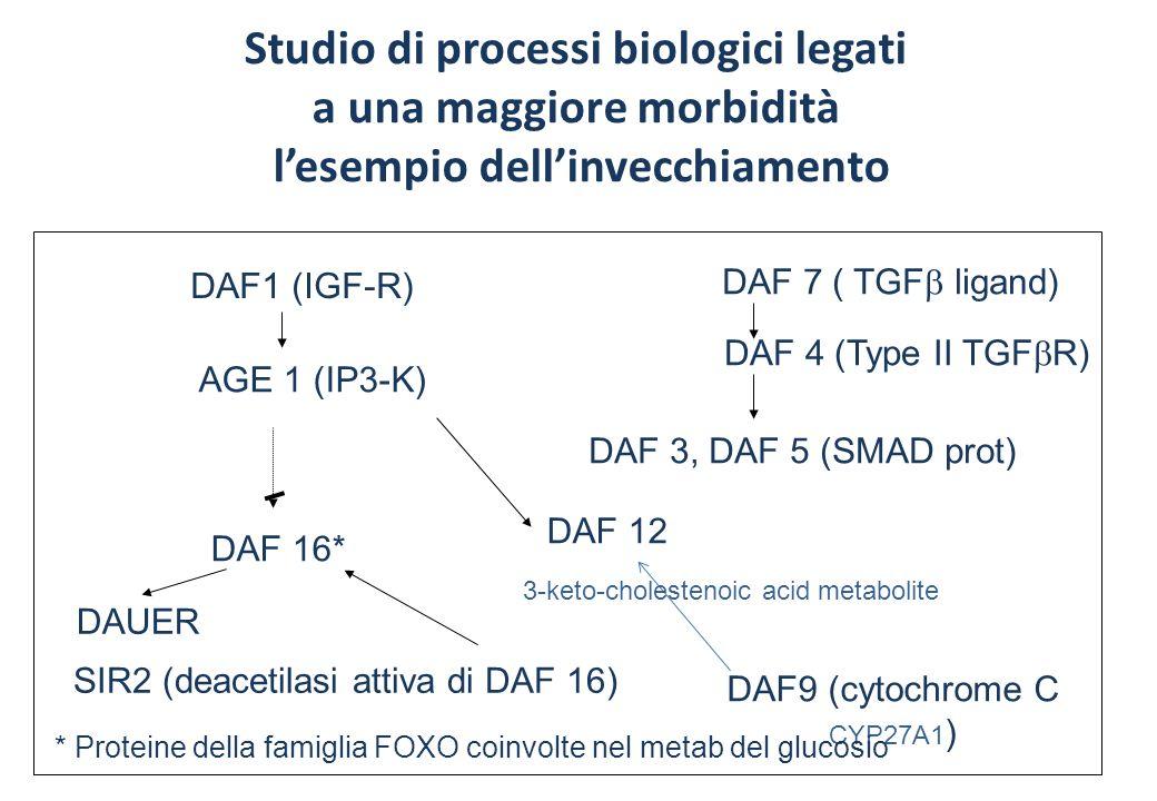 Studio di processi biologici legati a una maggiore morbidità lesempio dellinvecchiamento DAF1 (IGF-R) AGE 1 (IP3-K) DAF 16* DAF 12 DAUER DAF 7 ( TGF ligand) DAF 4 (Type II TGF R) DAF 3, DAF 5 (SMAD prot) DAF9 (cytochrome C CYP27A1 ) * Proteine della famiglia FOXO coinvolte nel metab del glucosio SIR2 (deacetilasi attiva di DAF 16) 3-keto-cholestenoic acid metabolite
