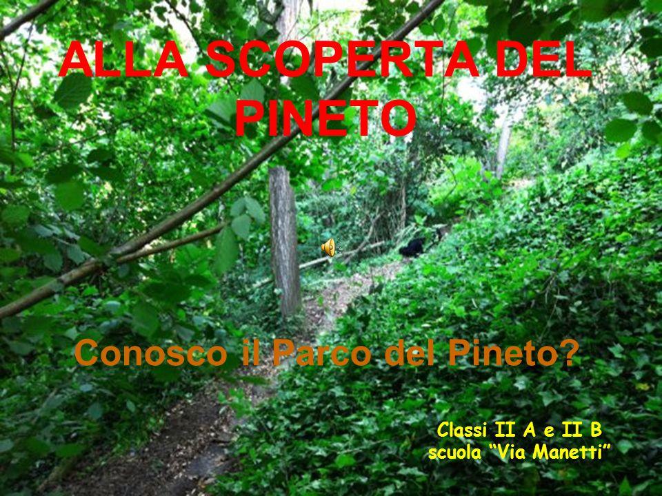 ALLA SCOPERTA DEL PINETO Conosco il Parco del Pineto Classi II A e II B scuola Via Manetti