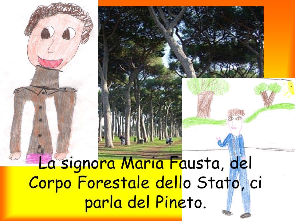 La signora Maria Fausta, del Corpo Forestale dello Stato, ci parla del Pineto.