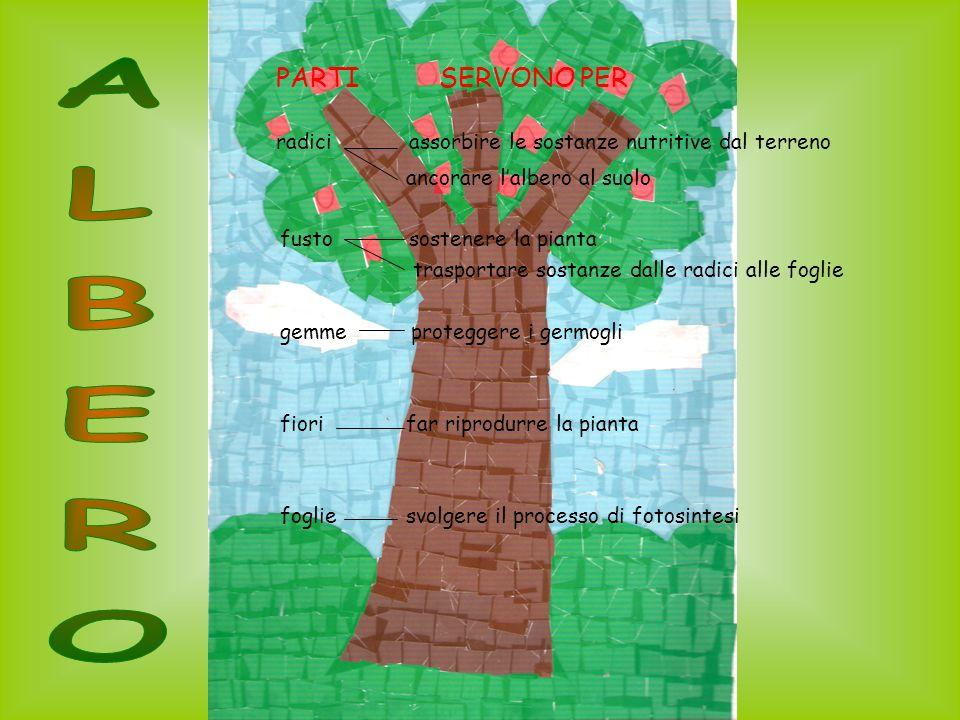 PARTI SERVONO PER radici assorbire le sostanze nutritive dal terreno ancorare lalbero al suolo fusto sostenere la pianta trasportare sostanze dalle radici alle foglie gemme proteggere i germogli fiori far riprodurre la pianta foglie svolgere il processo di fotosintesi