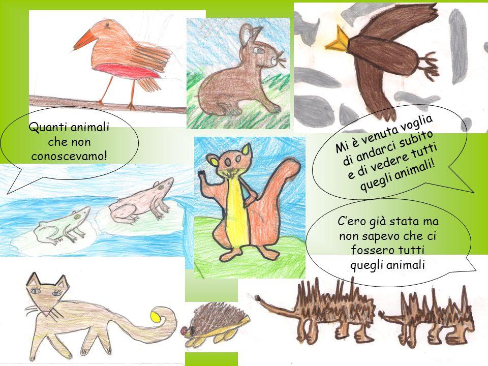 Quanti animali che non conoscevamo.