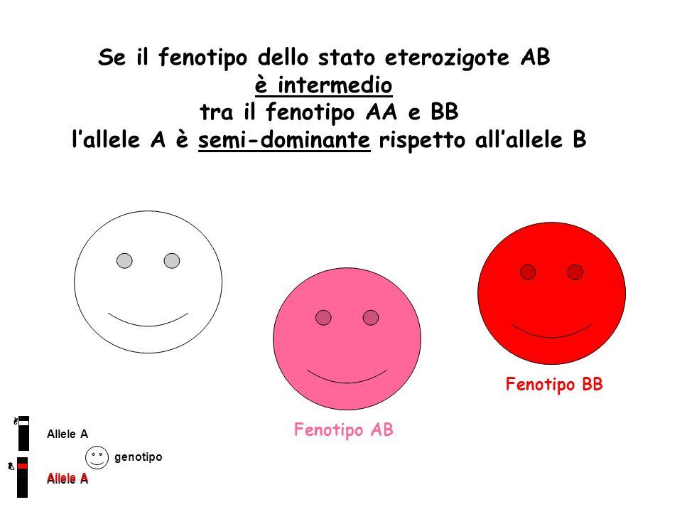 Se il fenotipo dello stato eterozigote AB è intermedio tra il fenotipo AA e BB lallele A è semi-dominante rispetto allallele B Allele A genotipo Fenot