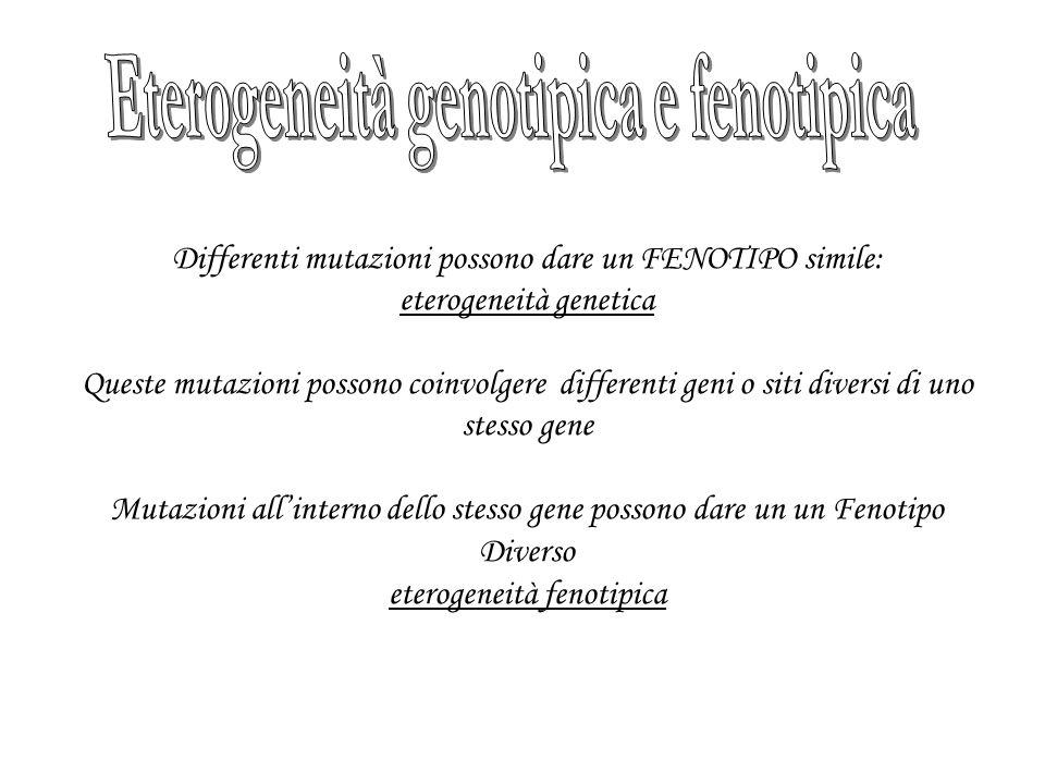 Differenti mutazioni possono dare un FENOTIPO simile: eterogeneità genetica Queste mutazioni possono coinvolgere differenti geni o siti diversi di uno