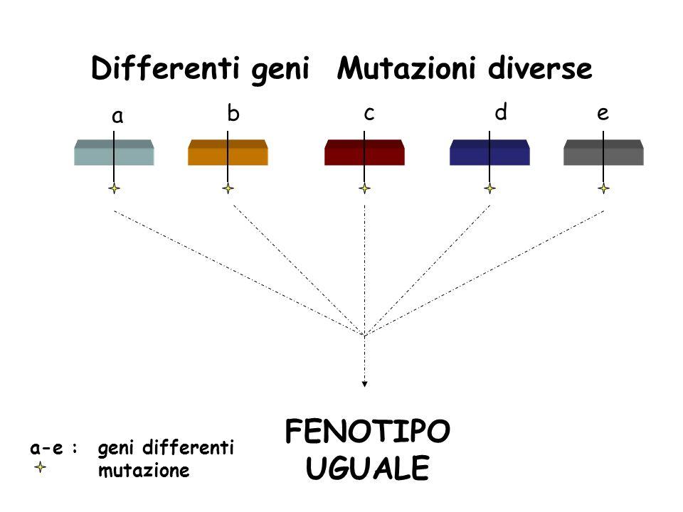 a b cde a-e : geni differenti mutazione FENOTIPO UGUALE Differenti geni Mutazioni diverse