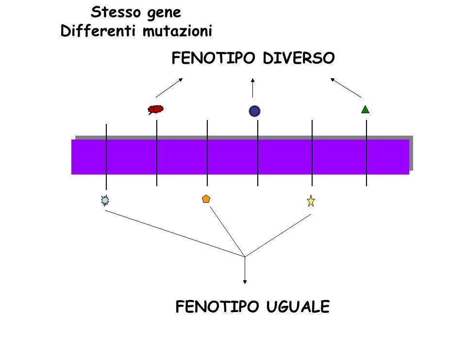 Stesso gene Differenti mutazioni FENOTIPO DIVERSO FENOTIPO UGUALE