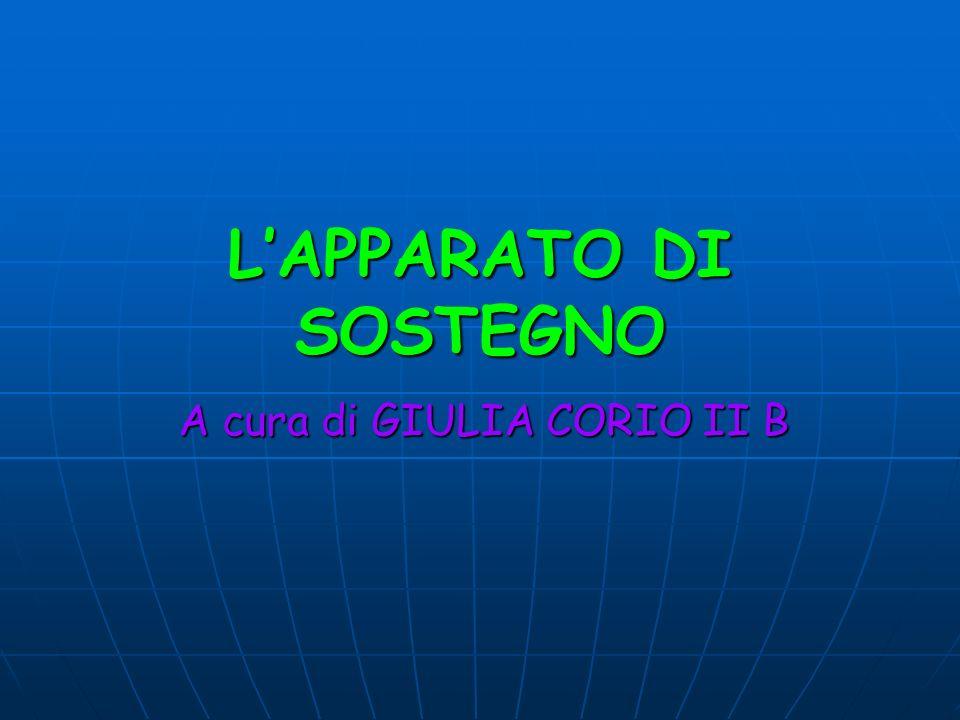 LAPPARATO DI SOSTEGNO A cura di GIULIA CORIO II B