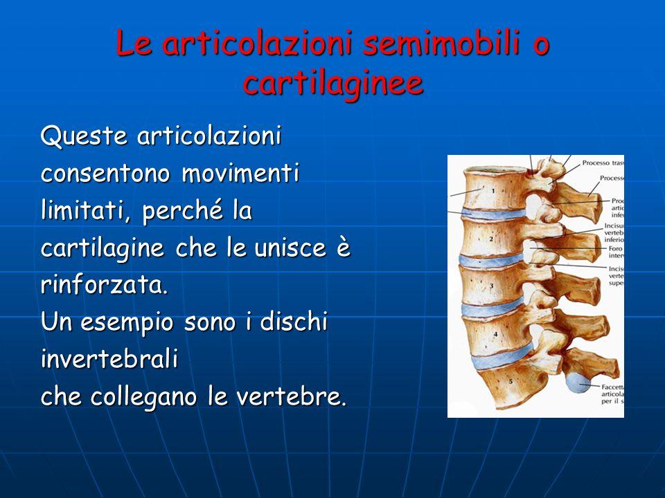Le articolazioni semimobili o cartilaginee Queste articolazioni consentono movimenti limitati, perché la cartilagine che le unisce è rinforzata. Un es