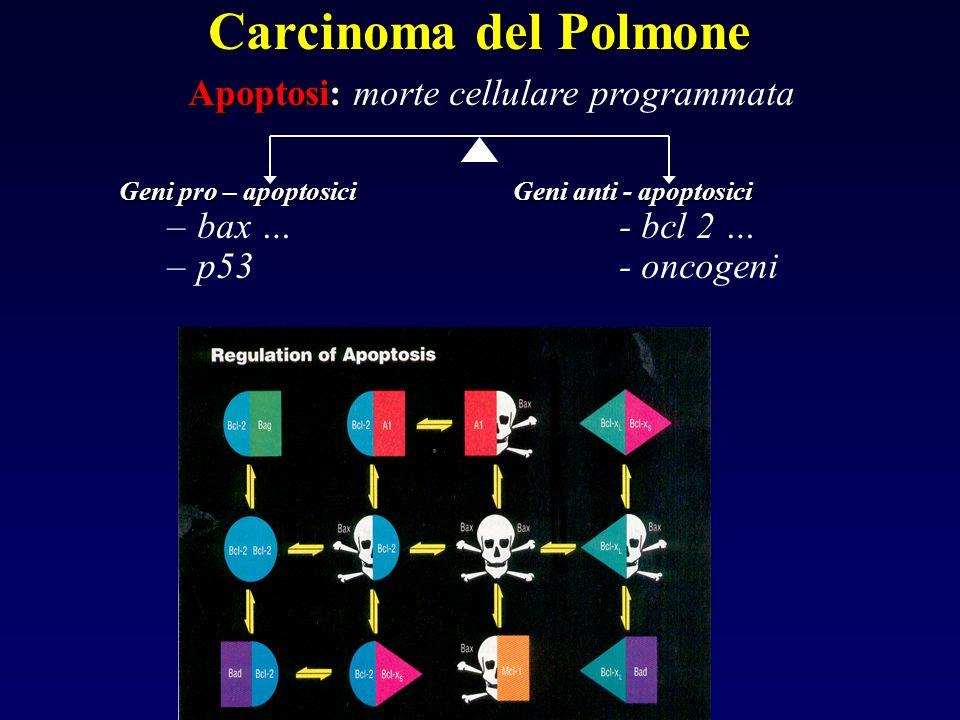 Apoptosi Apoptosi: morte cellulare programmata Geni pro – apoptosici Geni anti - apoptosici – –bax …- bcl 2 … – –p53- oncogeni Carcinoma del Polmone