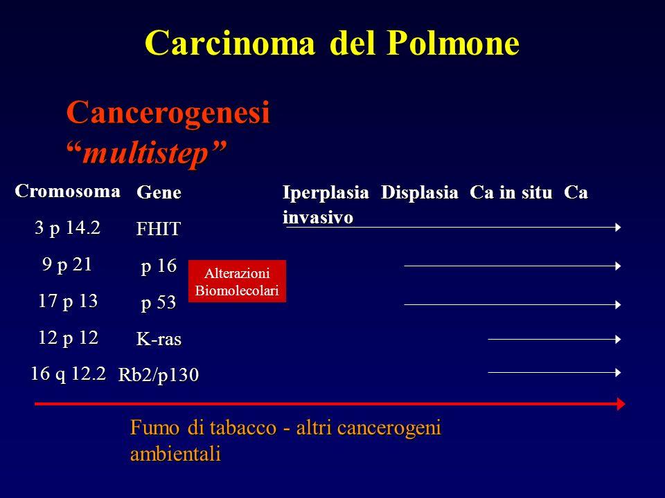 Cromosoma 3 p 14.2 9 p 21 17 p 13 12 p 12 16 q 12.2 GeneFHIT p 16 p 53 K-rasRb2/p130 IperplasiaDisplasia Ca in situ Ca invasivo Iperplasia Displasia Ca in situ Ca invasivo Cancerogenesimultistep Fumo di tabacco - altri cancerogeni ambientali Carcinoma del Polmone Alterazioni Biomolecolari