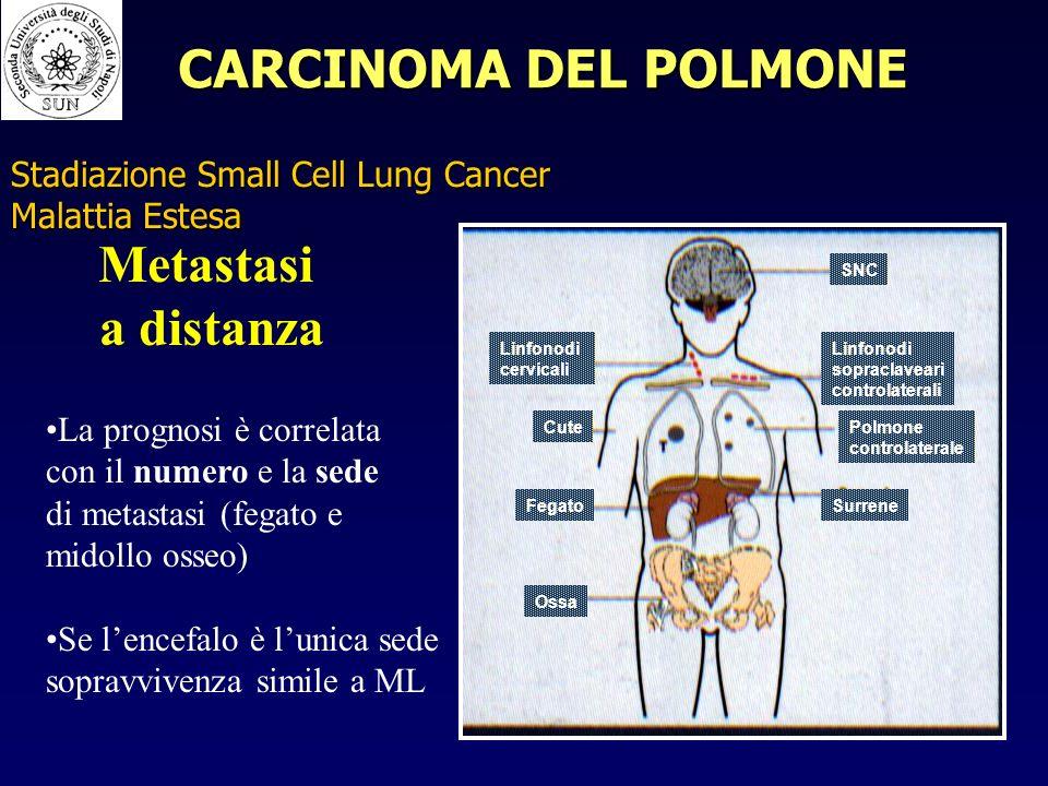 SNC Linfonodi cervicali Cute Linfonodi sopraclaveari controlaterali Polmone controlaterale SurreneFegato Ossa Metastasi a distanza La prognosi è correlata con il numero e la sede di metastasi (fegato e midollo osseo) Se lencefalo è lunica sede sopravvivenza simile a ML Stadiazione Small Cell Lung Cancer Malattia Estesa CARCINOMA DEL POLMONE
