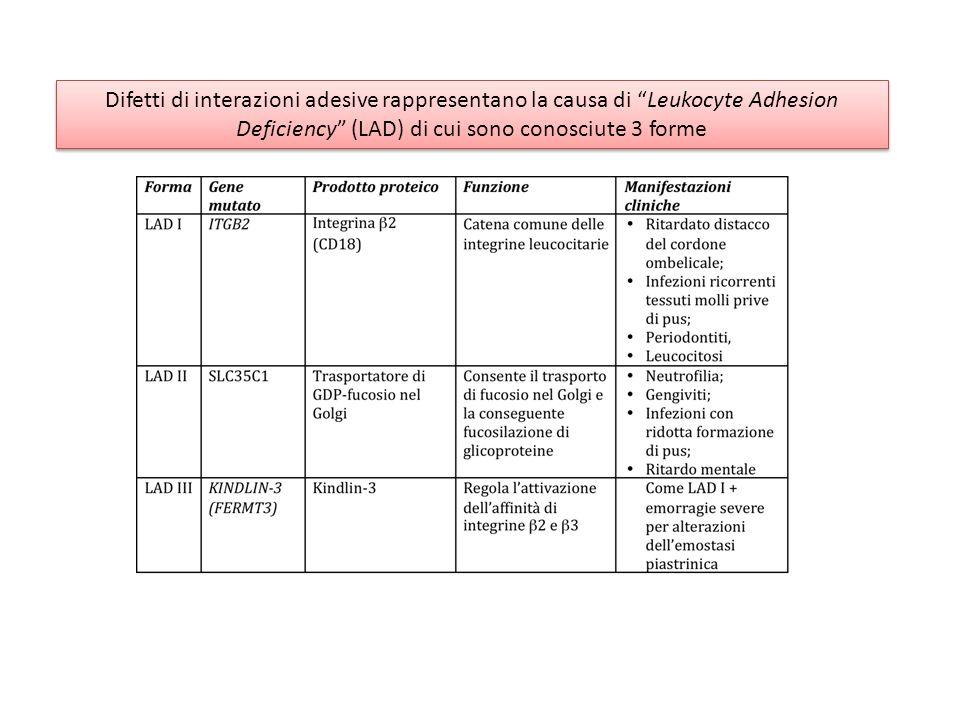 Difetti di interazioni adesive rappresentano la causa di Leukocyte Adhesion Deficiency (LAD) di cui sono conosciute 3 forme Difetti di interazioni ade