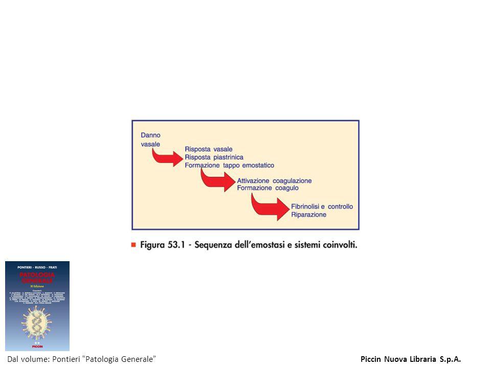 Figura 53.1 - Sequenza dell'emostasi e sistemi coinvolti. Dal volume: Pontieri Patologia GeneralePiccin Nuova Libraria S.p.A.