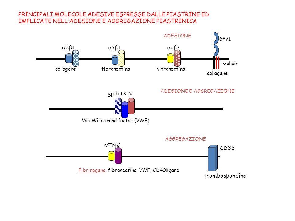 Fibrinogeno, fibronectina, VWF, CD40ligand IIb 3 PRINCIPALI MOLECOLE ADESIVE ESPRESSE DALLE PIASTRINE ED IMPLICATE NELLADESIONE E AGGREGAZIONE PIASTRI
