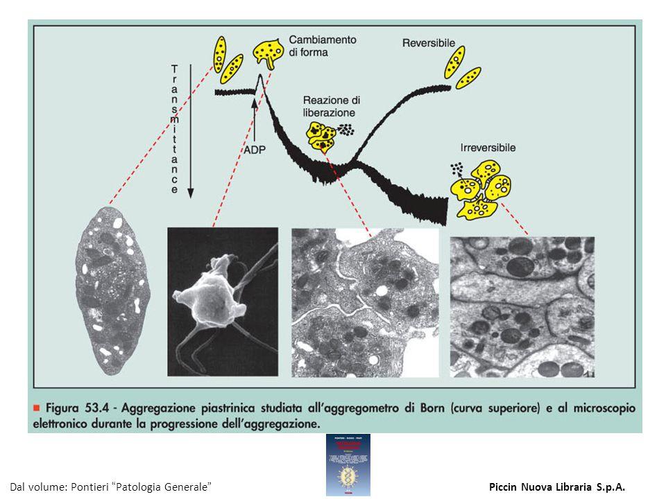 Figura 53.4 - Aggregazione piastrinica studiata all'aggregometro di Born (curva superiore) e al microscopio elettronico durante la progressione dell'a