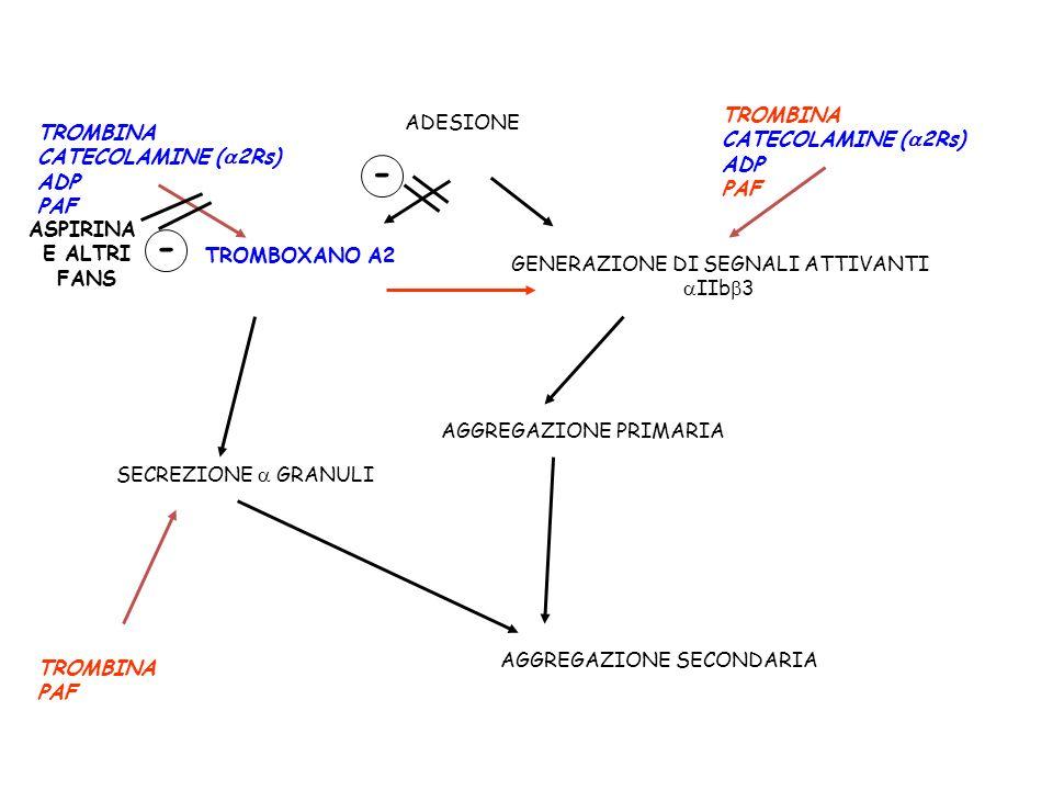 ADESIONE GENERAZIONE DI SEGNALI ATTIVANTI IIb 3 AGGREGAZIONE PRIMARIA TROMBOXANO A2 SECREZIONE GRANULI AGGREGAZIONE SECONDARIA TROMBINA CATECOLAMINE (
