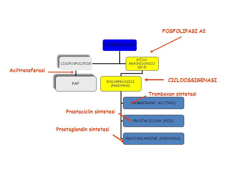 FOSFOLIPIDE ACIDO ARACHIDONICO (20:4) LISOFOSFOLIPIDE PAF ENDOPEROSSIDI (PGG2/PGH2) TROMBOXANO A2 (TXA2) PROSTACICLINA (PGI2) PROSTAGLANDINE (PGE2/PGD