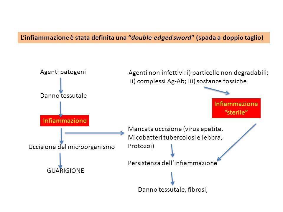 Linfiammazione è stata definita una double-edged sword (spada a doppio taglio) Agenti patogeni Danno tessutale Infiammazione Uccisione del microorgani