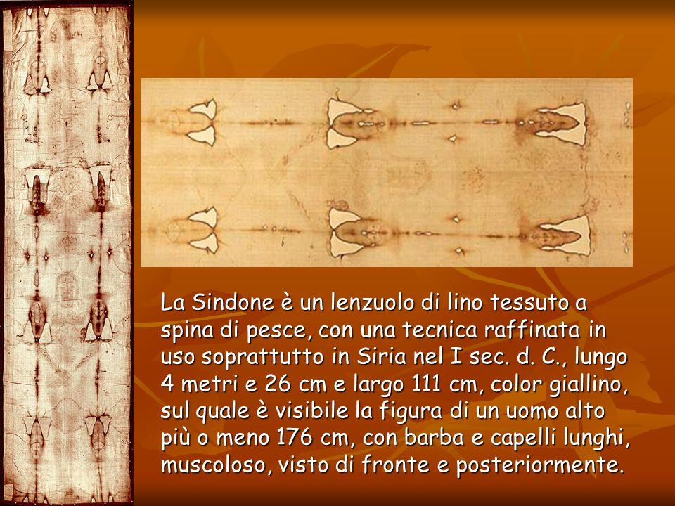 La Sindone è un lenzuolo di lino tessuto a spina di pesce, con una tecnica raffinata in uso soprattutto in Siria nel I sec. d. C., lungo 4 metri e 26